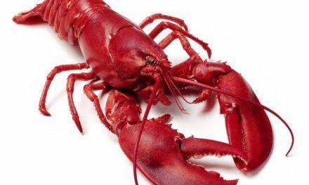 Jak i ile gotować homara