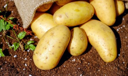 Jak gotować ziemniaki