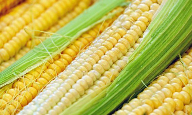 Jak i ile gotować kukurydzę